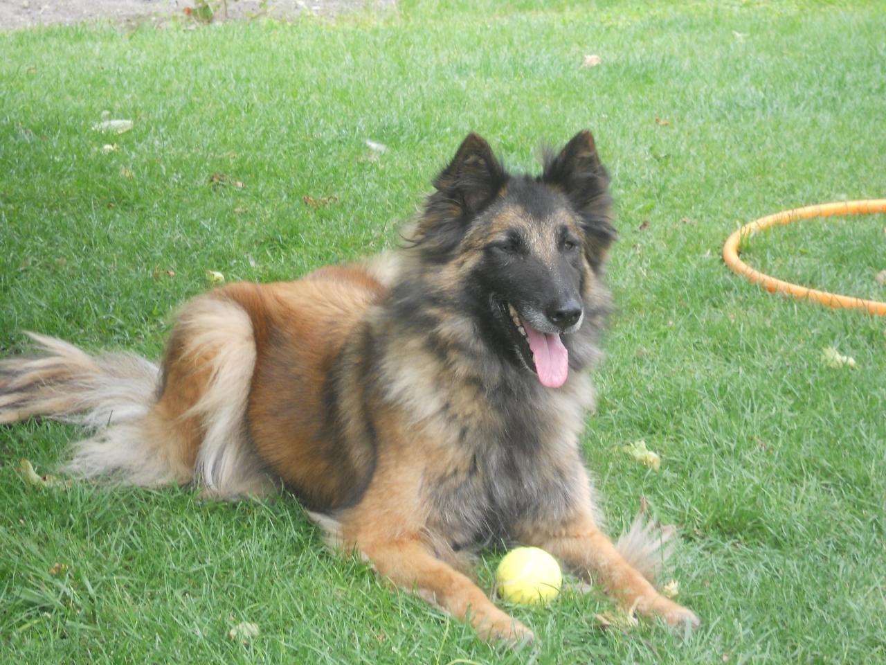 educ'dog éducateur canin comportementaliste: mes chiens: gabbana