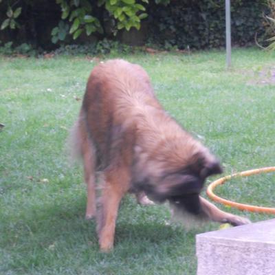 mes chiens: gabbana