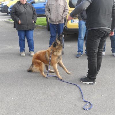 Frédéric Leclerc éducateur canin: formation risque canin