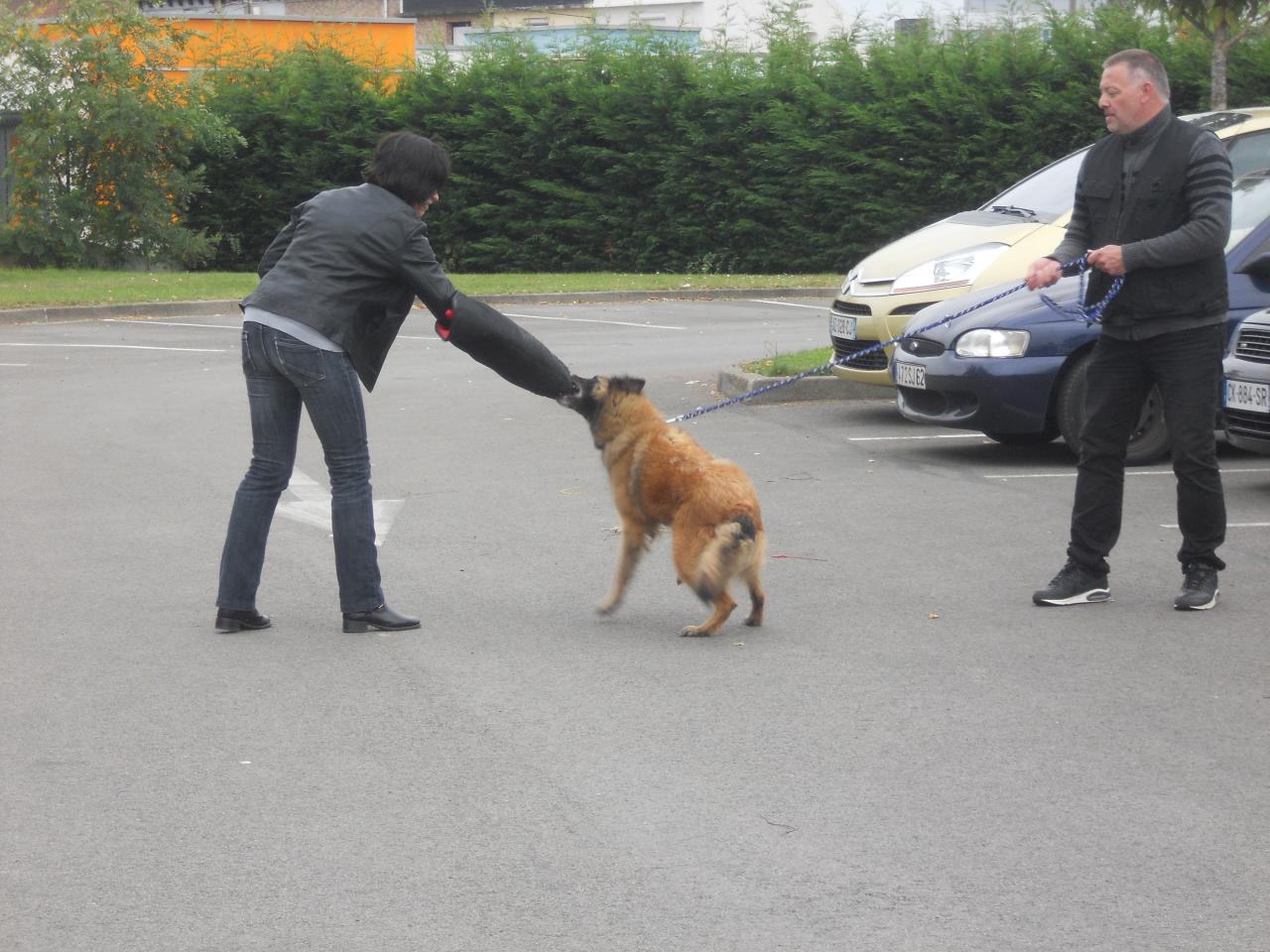 educ'dog simulation de morsure2