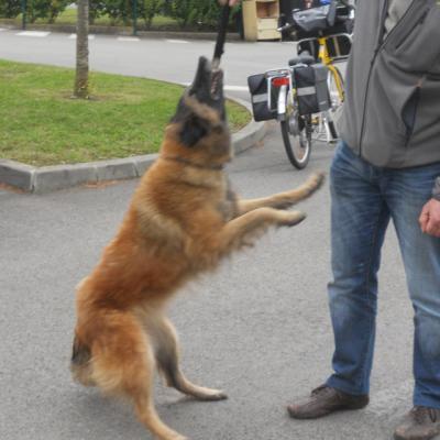 Frédéric Leclerc: formation risque canin