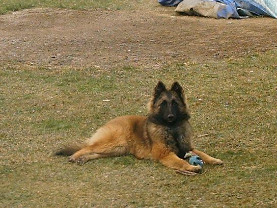 educ'dog éducateur canin comportementaliste: Gabbana des masques noirs